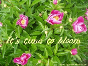 It's Time To Bloom