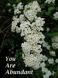 You Are Abundant