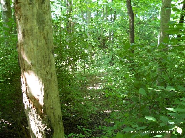 treess2